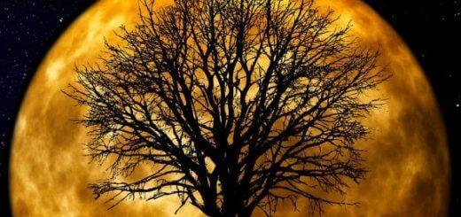 tree-66465_960_720-720x340